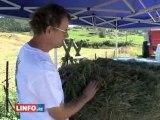 A la découverte de la filière lait locale - Filière bovine laitière, - Informations Réunion - LINFO.re