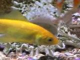 00001 - Mon aquarium de poissons rouges et de poissons sauvages . 10-1-2012.