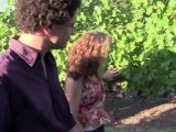 Top Merlot, family wineries, Napa Valley, shop for wine, boutique winery