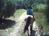 sixtine promenade cheval alpilles 3