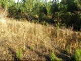 Visite Matoucat, ses zones humides, sa flore, son ancienne décharge non réhabilitée