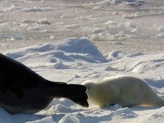 Baby Seals in the Arctic