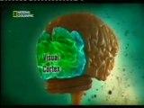 Cerebro y percepcion: Ilusiones opticas