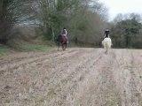 Course au galop avec les poneys