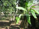 Property for sale in Trivandrum City : Plots for Sale at Vazhuthacaud, Trivandrum