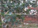 Trivandrum Property Classifieds : Land for Sale at Parassala, Trivandrum