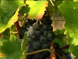 Vin bio naturel sans sulfites - Sud de la France - Costes Cirgues