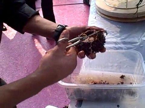 Comment ouvrir un oursin