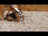 Barking Hound Village Presents - Pup Pals