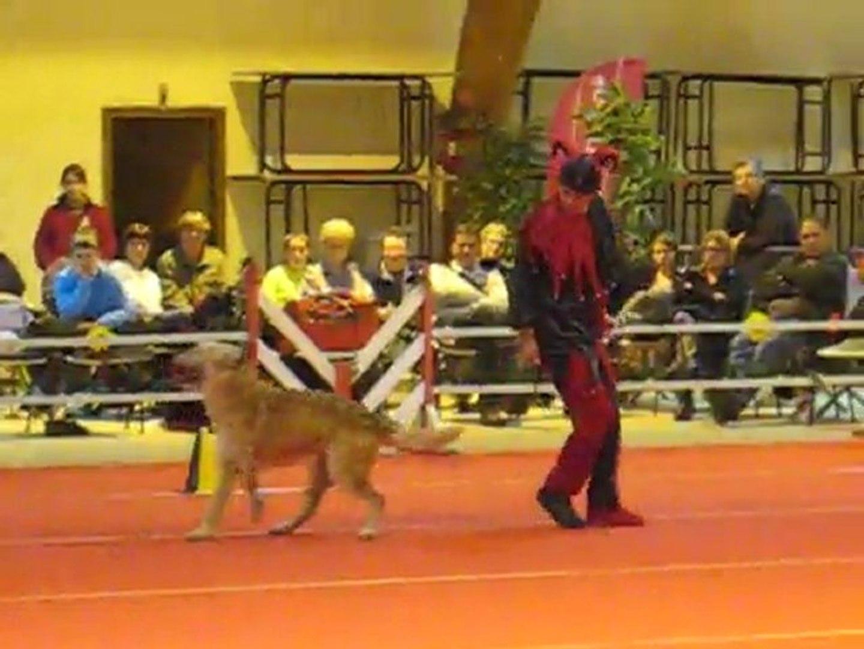 Doggy Dance Arlette et Zinga aui GPF 2011 à Compiègne (FR)