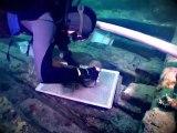 Les épaves de la Natière. Archéologie sous-marine à Saint-Malo