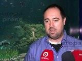 Visitantes conocen a los peces 'Pipa'