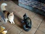 bagarre de chats 001