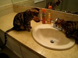 These cats love drinking tap water