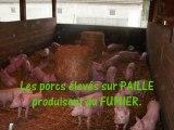 Le cycle des effluents en élevage porcin