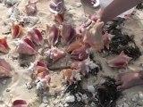 Cape Eleuthera resort: loads of conch shells