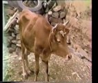 """Maroc 1987 : """"PAYSANS BERBERES DU GRAND SUD MAROCAIN"""" (non découpé)"""