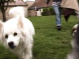 Une très jolie vidéo faite par une stagiaire en avril 2011 ! Les chiens à la maison !