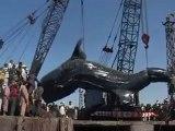L'un des plus gros requins-baleines au monde remonté au Pakistan