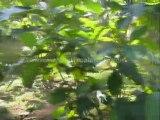 trivandrum real estate classifieds - Land for sale at Kadakkavur, Trivandrum