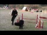 Fierous 1er concours Agility La Venise Provençale 12/02/12