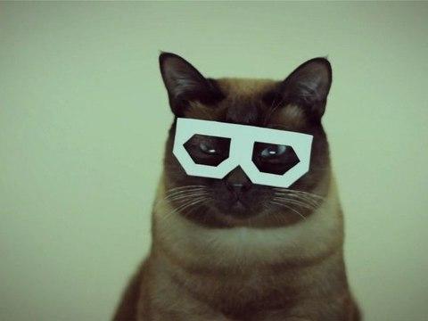 Hipster Cat Dubstep