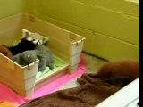 Adorable Rats?