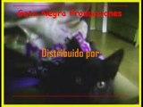 OA Yashaii Garcia Producciones y Gata Negra Producciones