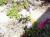 sacre du printemps