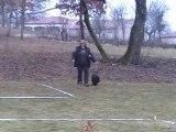 Dandy concours cavage de labastide Marnac le 19 février 2012