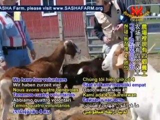 Shining World Compassion Award: SASHA Farm