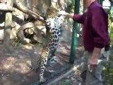 Zoo Fail : Comment ne pas nourrir un félin ?