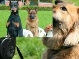 dog anxiety separation - dog and separation anxiety - separation anxiety in dog