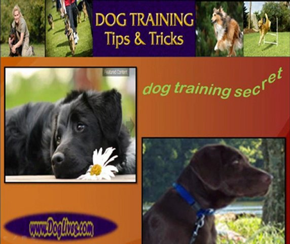 dog training secret