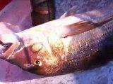 Adrasan 5 adalarda jigging ile Sinarit balığı avı