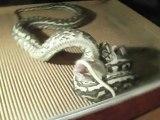 Coastal Carpet Python. Feeding Time !