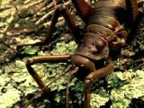 Caminando entre Dinosaurios 05 - Espiritus del Bosque de Hielo