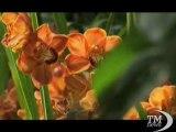 Una montagna di orchidee in mostra a New York. Migliaia di fiori esposti al Brooklyn Botanic Garden