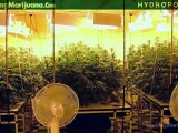 Hydroponics - Hydroponic Marijuana Growing - Hydro Weed Grow How To - 16