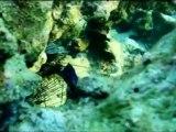 Plongées au Yucatan (Mexique)