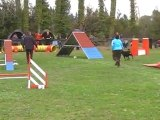 Dolce agility eyragues 12 GPF