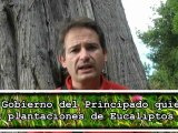 Más eucaliptos en Asturias. Ecologistas critican al Gobierno del Principado