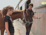 Equitv : Leçon d'équitation :Attacher son cheval