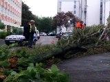 Fort coup de vent dans le Pas-de-Calais : un arbre tombe sur une voiture