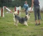 """Fête du club canin """"La Récré@chien"""", 16 septembre 2012"""
