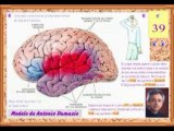 Neurologia 11 - Lenguaje Localizacion de los Verbos - Prof Manuel Lafarga