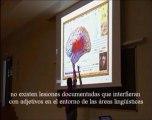 Neurologia 14 - Lenguaje Localizacion de los Adjetivos - Prof Manuel Lafarga