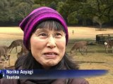 Japon: les daims de Nara, sacrés gourmands amateurs de musique