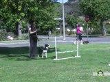 Dog Agility - Training your Dog Basic Jumping Skills