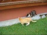 Katzen und Mäuse_0001